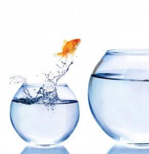 Jumping, Goldfish, Fish.